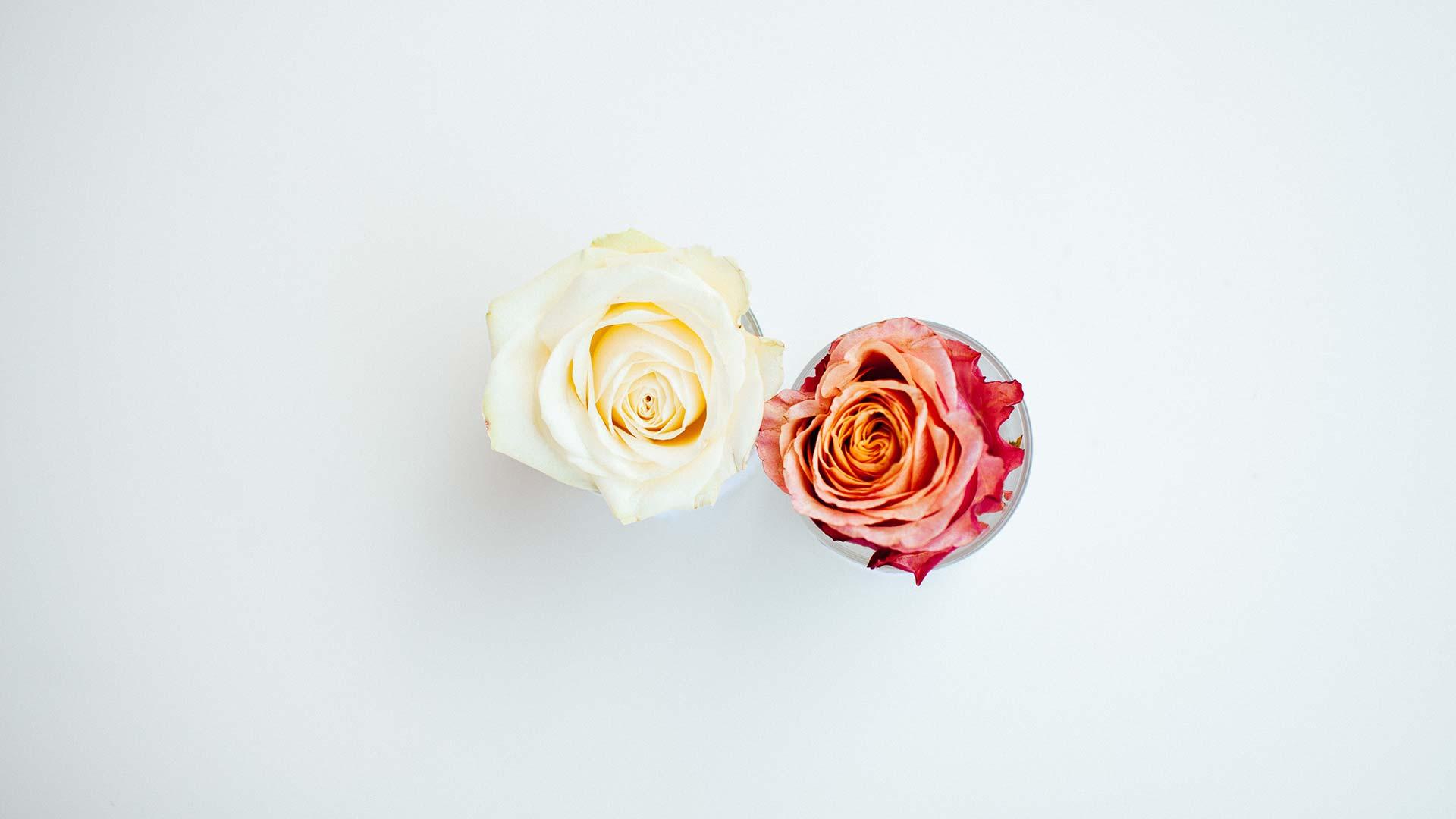 poroka-dekoracija