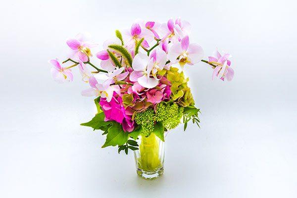 sopek eleganca-orhideje